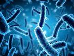 Economic Importance of Virus