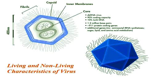 Mention the Living and Non-Living Characteristics of Virus
