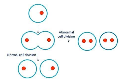 Abnormal Cell Division
