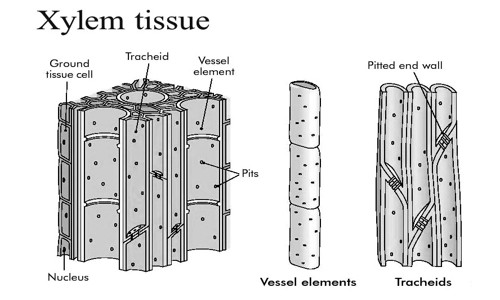 What is Complex Tissue? - QS Study