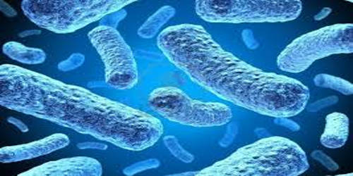 Discuss the Economic Importance of Bacteria