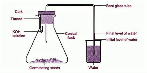 Experiment of Anaerobic Respiration 1