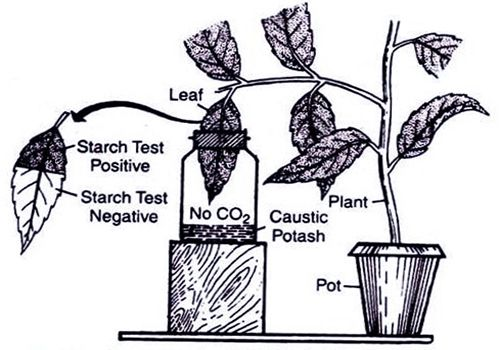 Experiment of Photosynthesis