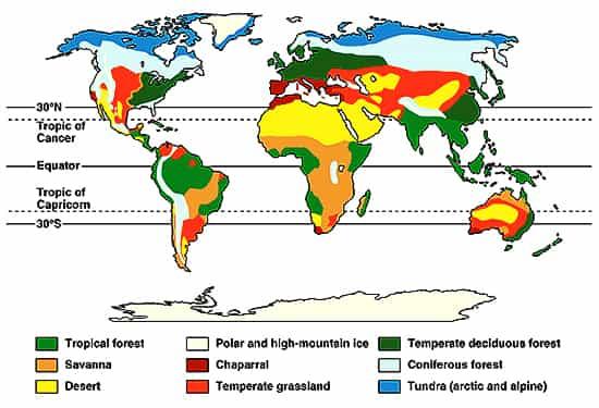 Describe Major Eco-systems