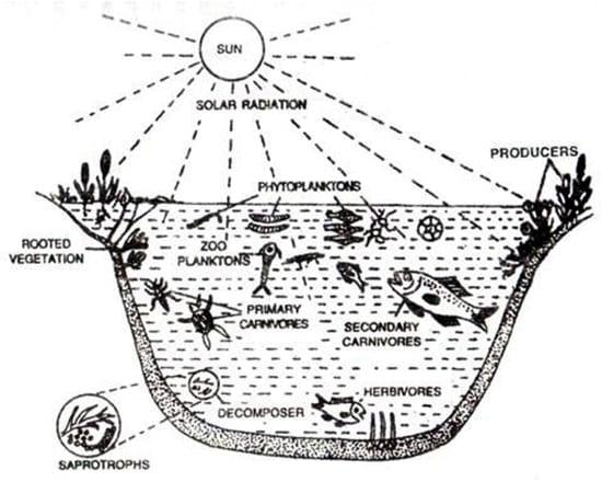 pond ecosystem