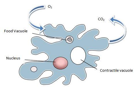 Slime Mold Diagram