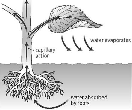 What is Transpiration? - QS Study