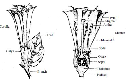 Different Parts Of A Flower