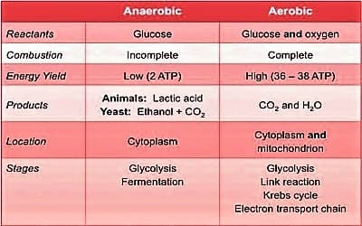 aerobic and anaerobic respiration 1