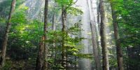 Importance of Forest Regions for Maintaining Ecological Balance