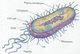 Archae Bacteria