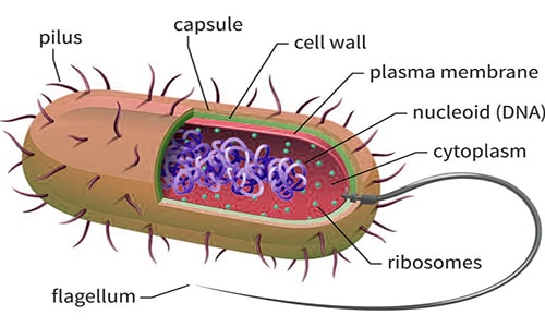 prokaryotic cell qs study