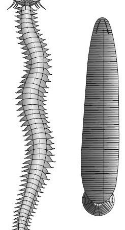 Describe on Phylum Annelida