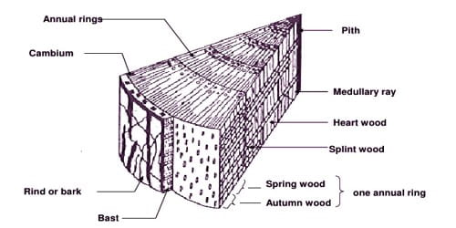 Define Spring Wood and Autumn Wood