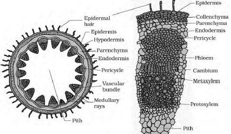 Parts of a seed and their functions