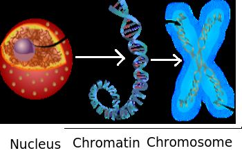 relationship between histone and nonhistone definition