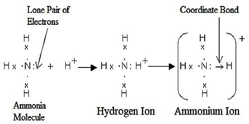 Which type of Bonds is present in Ammonia Ion?