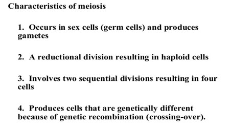 Characteristics of Meiosis 1