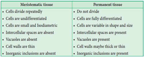 Meristematic Tissue and Permanent Tissue 1