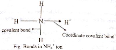 Which type of Bonds is present in Ammonia Ion? - QS Study