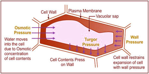 What is Wall Pressure?