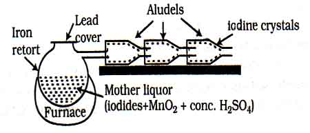 manufacture-of-iodine-from-sea-weeds