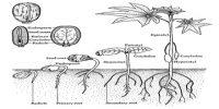 Define Angiosperm Plants