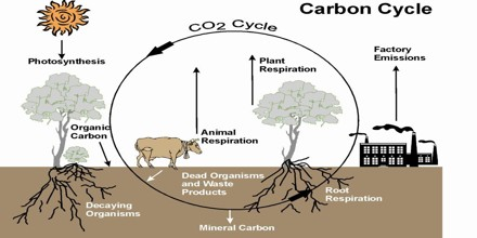 Define and Discuss on Carbon Cycle