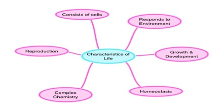 Characteristics of Life or Living Things
