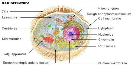 Explain on Structure of Cell