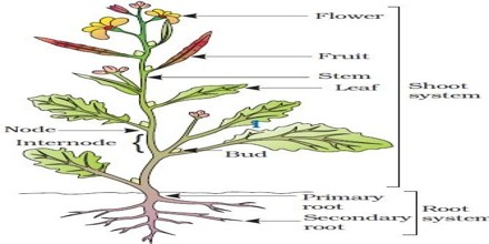 Explain Different Parts of a Typical Flowering Plant