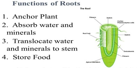 Functions of Roots