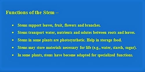 Functions of the Stem