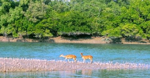 Mangrove Ecosystem of Sundarban