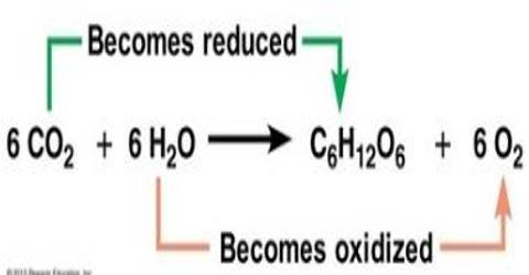 Source of Oxygen during Photosynthesis