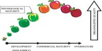 Physiology of Production of Fruits and Seeds
