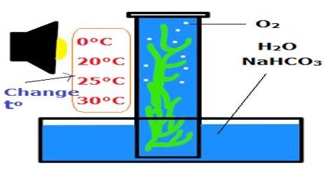 Observe the Affect of Temperature on Solution