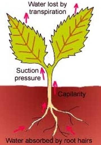 transpiration in plants 1