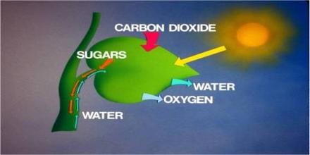 chemical formula chemosynthesis Photosynthesis and chemosynthesis are both processes by which organisms produce food photosynthesis is powered by sunlight while chemosynthesis runs on chemical energy.