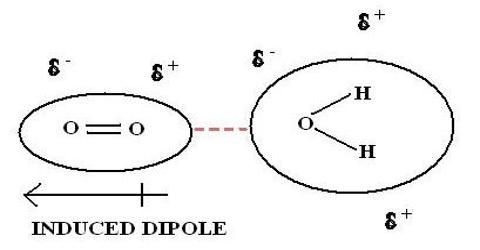 Dipole-Induced Dipole Interactions