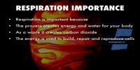 Importance of Respiration