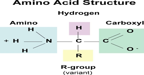 Proteins: Definition and Structure as Chemical Molecules