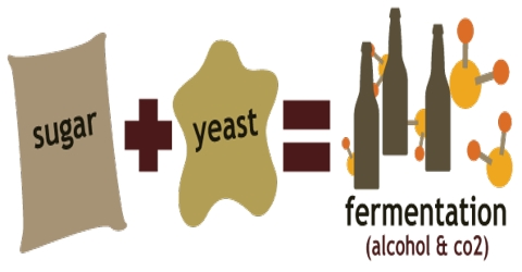 Fermentation: Definition, Characteristics and Usage