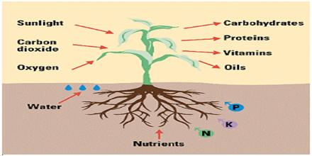 How plants absorb mineral salts qs study for Minerals present in soil