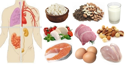 Protein for Body