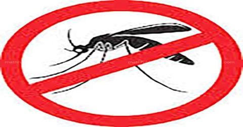Mosquito Menace