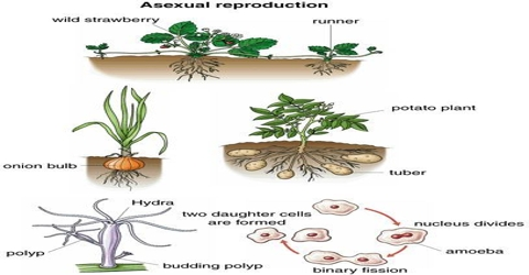 Asexual Reproduction - QS Study
