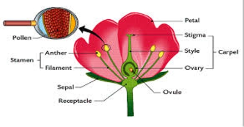 Different Parts of Flower