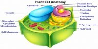 What types of Membranes Found in Plants?