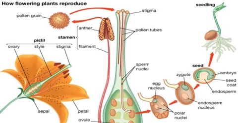 Agamogenesis asexual reproduction pictures